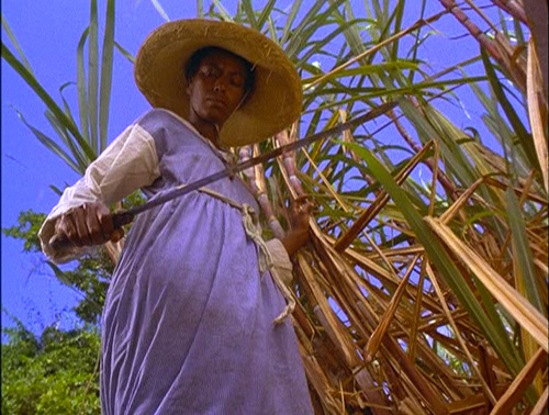 Scene looking up at a woman in sugar cane field with machete in hand